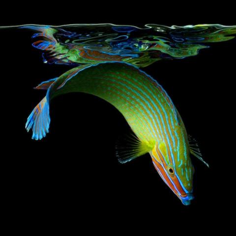 Великолепие подводного мира …