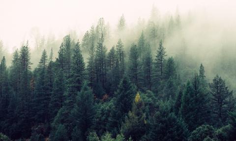 Учёные решили сканировать деревья