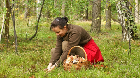 Три дореволюционных рецепта соления грибов