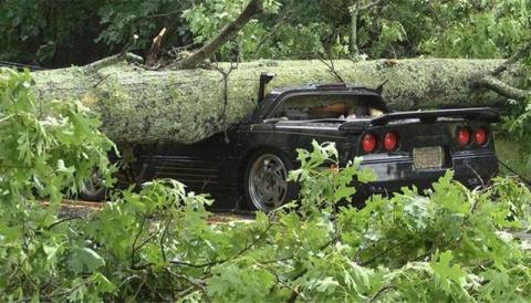 Голова оказалась крепкой: Chevy Corvette с водителем попал под дерево