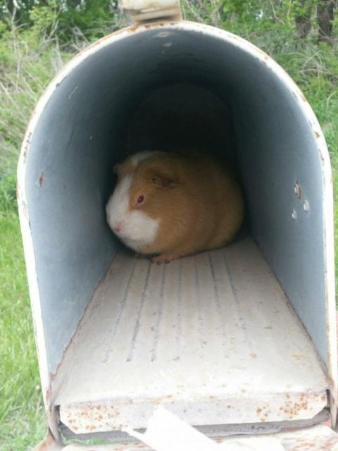 Подброшенная в почтовый ящик…