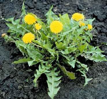 Съедобные растения на случай…
