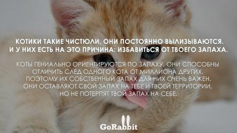 Повадки животных, которые зн…