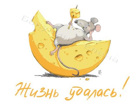 Мышь понимает в сыре – но не…