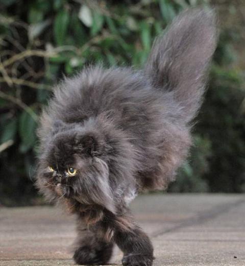 Коты с недокомплектом лап