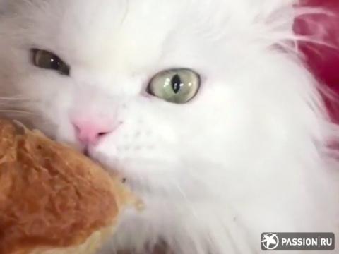 Поедающий круассан кот стал звездой Интернета