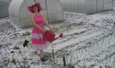 Холодное лето и наш огород