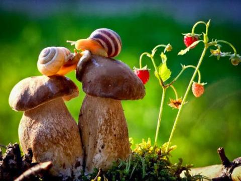 День грибника: C «тихой охотой»