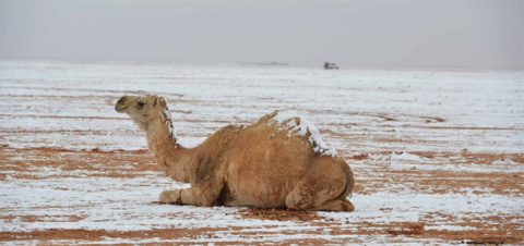 В пустыне Сахара произошла п…