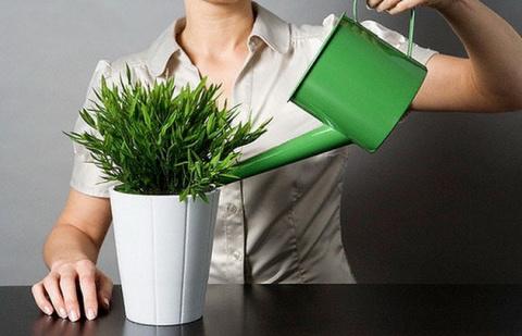 Удобрения для комнатных раст…