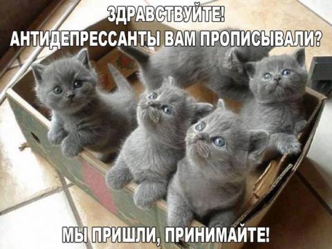 Просто забавные и милые котики