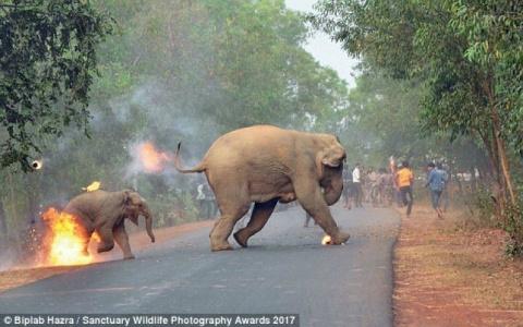 Шокирующее фото со слонихой и слоненком, бегущими от огня, получило награду