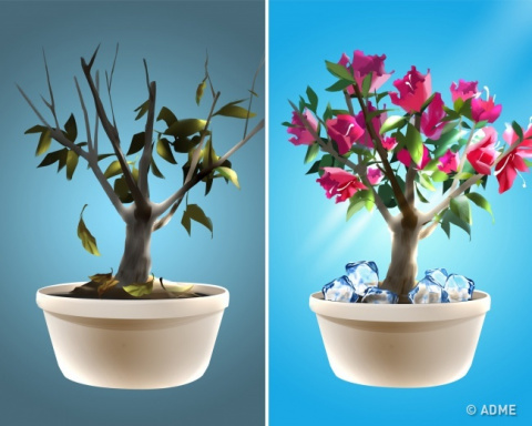 Простой трюк, с помощью которого ваши растения станут цвести пышно и невероятно долго