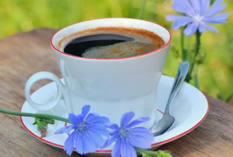 Цикорий полезные свойства напитка