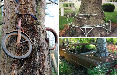Пугающие фото деревьев, поглощающих всё вокруг