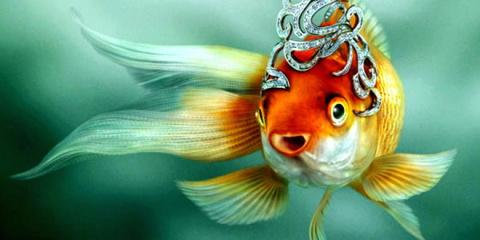 Золотая рыбка....