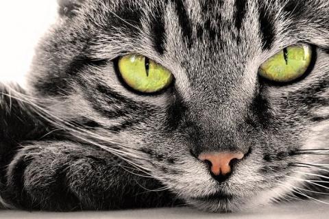 Кошка - показатель благополучия человека