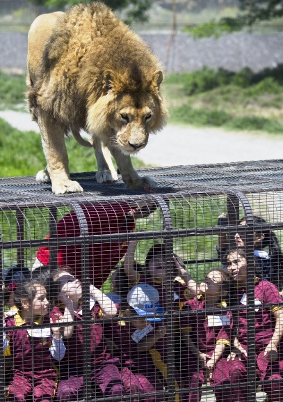 Самый правильный зоопарк, на…