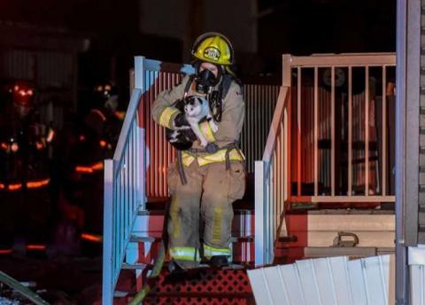 Кошка предупредила семью о пожаре