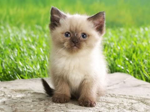 Смешные и милые котята