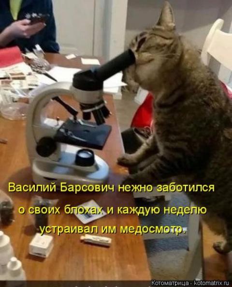Коты и кошечки говорят