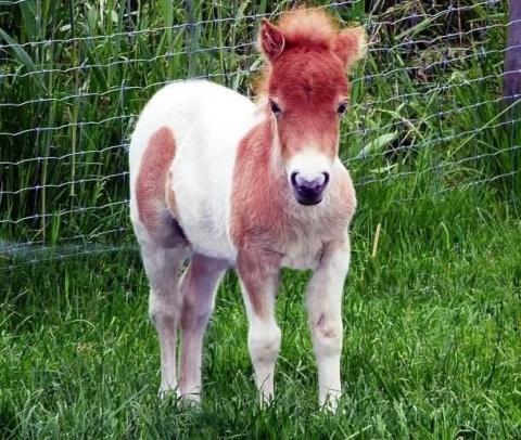 11 самых неожиданных животны…