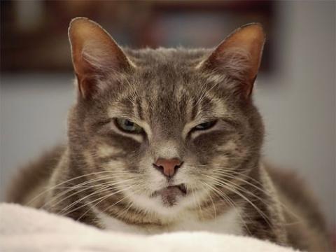 Эти коты могут осуждать одни…