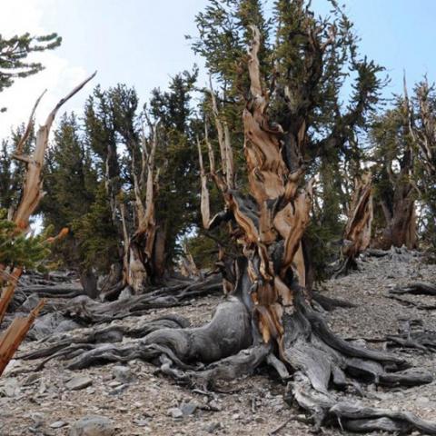 Древнейшие растения Земли