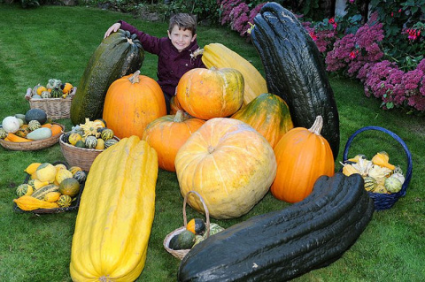 Фермер 30 лет выращивает гигантские овощи