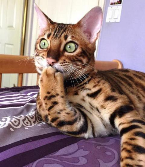 Сижу, гадаю… То ли кот насто…