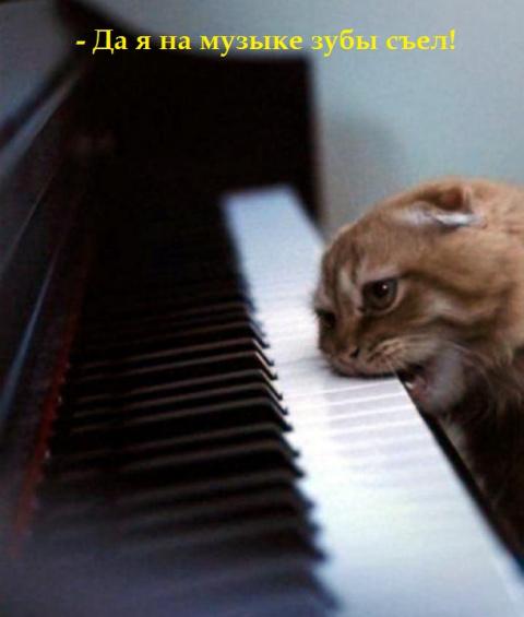Маленькие истории котов в картинках-4