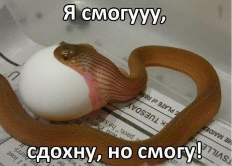 Змея и яйцо — кто победит в этом упорном сражении, как думаете?