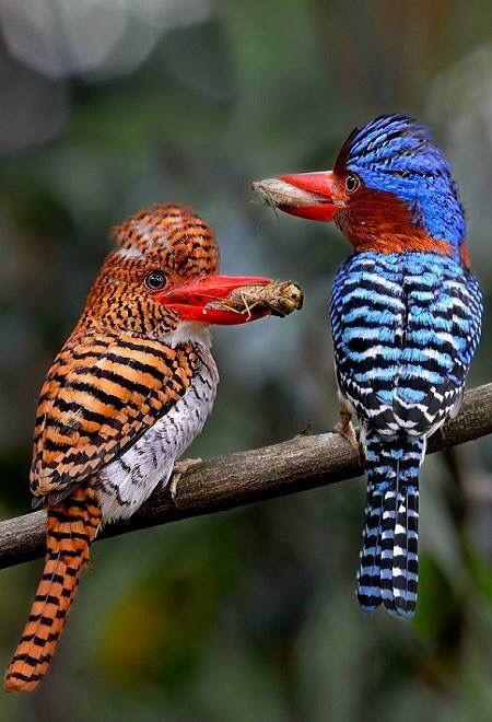 Великолепие фауны - 20 ярких птичек-невеличек