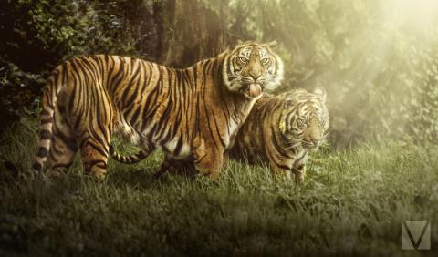 Животные с характером: серия…