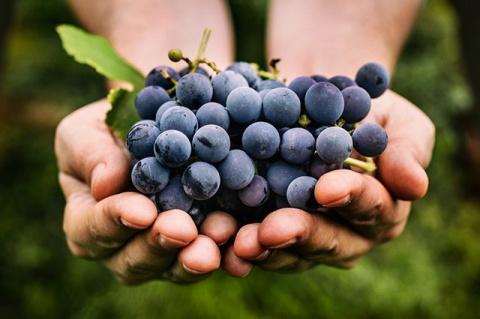 Кому наиболее полезен виноград и что из него приготовить