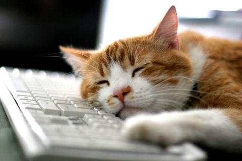 Правила жизни современного кота