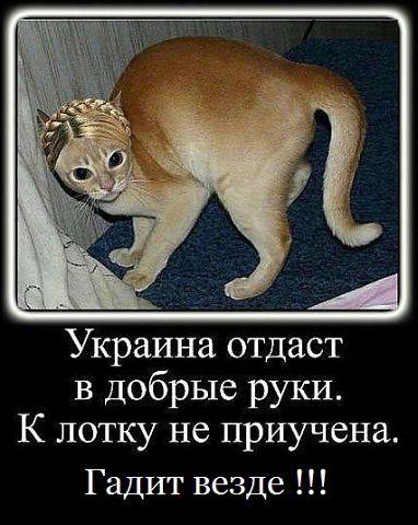 Тимошенко: глаза и роса