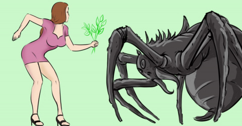 Больше никаких пауков в доме…