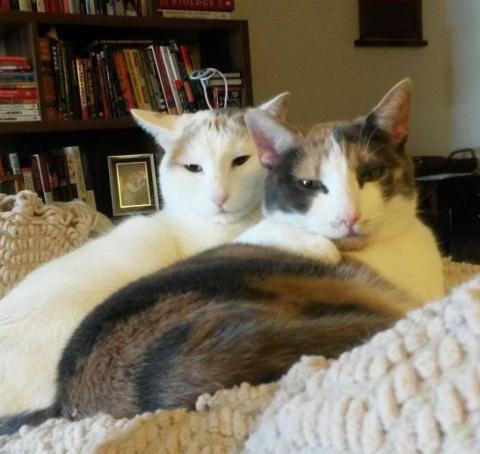 Кошки, которые делают все в …