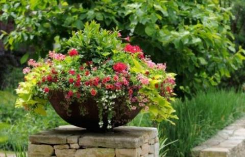 Однолетние и двулетние цветы для посадки в чаши и кадки