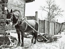 Лошади Первоуральска