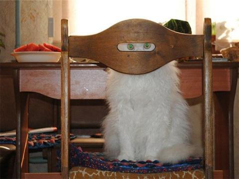 Коты, выглядывающие из своих укрытий