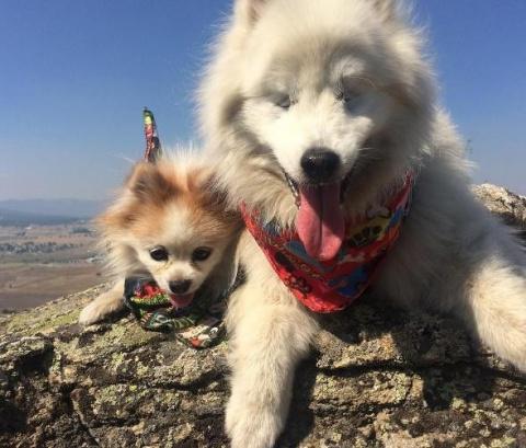 Маленькая спасенная собачка стала лучшим другом и поводырем слепому псу
