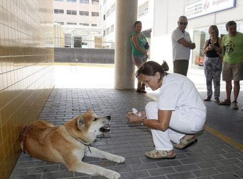 Собака 6 дней ждала хозяйку …