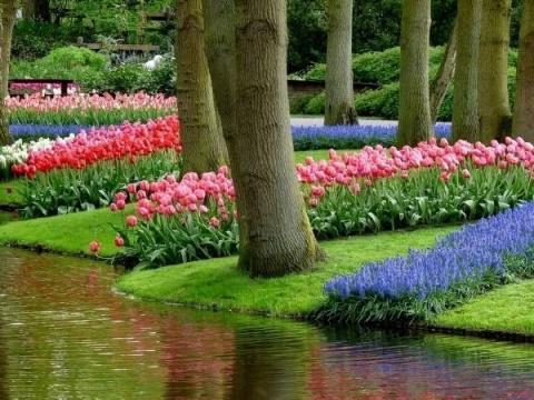 Парк цветов Кёкенхоф – пожалуй, самый красивый весенний парк в мире