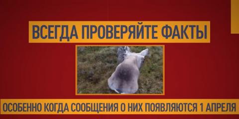 Как финское информагентство поверило в советских боевых лосей