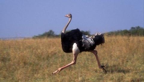 Самые известные рекорды птиц
