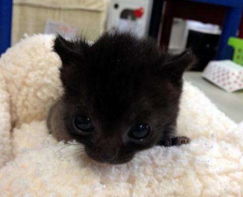 Прекрасные черные кошки не м…