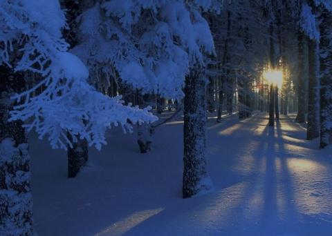 Тольяттинка выгуливала собаку и заблудилась в лесу