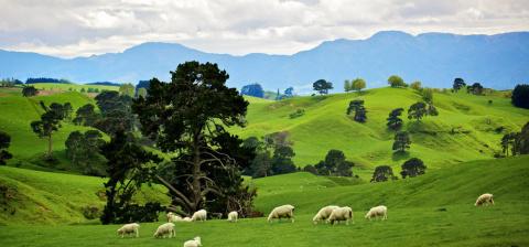 Новая Зеландия оказалась сед…